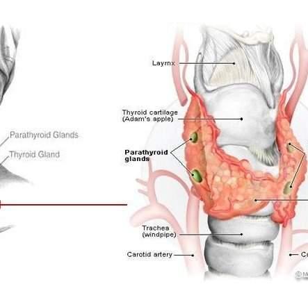 Index Thyroid Ablation